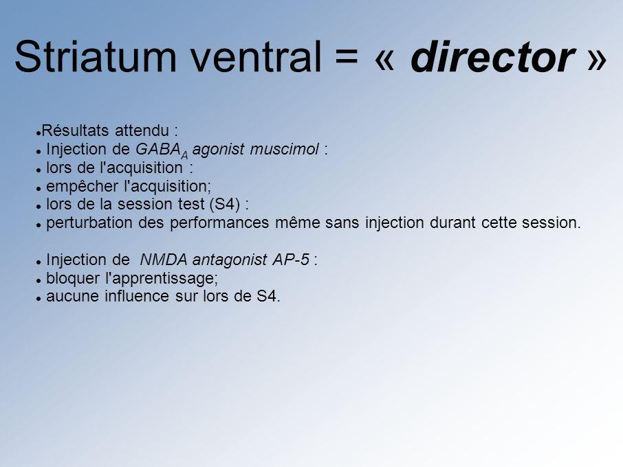 Striatum dorsal = « actor » Résultats attendu si : Injection de GABA A agonist muscimol : lors de la phase d acquisition : diminution des performances en l absence d injection lors de S4 : retour à des performances normales