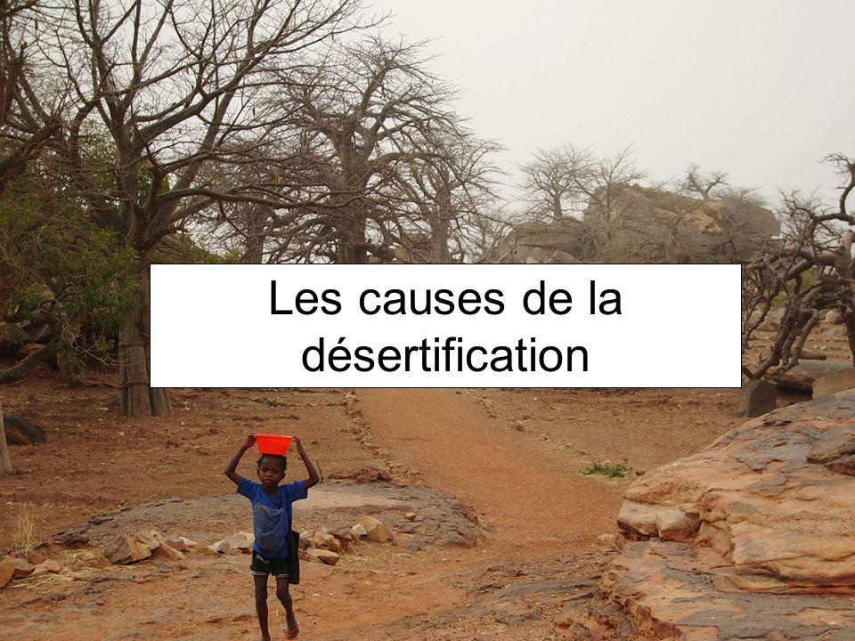 DÉFORESTATION SURPÂTURAGE