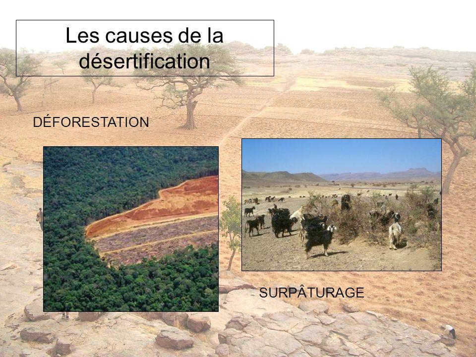 Quels gestes peux-tu poser pour participer à la lutte contre la désertification.