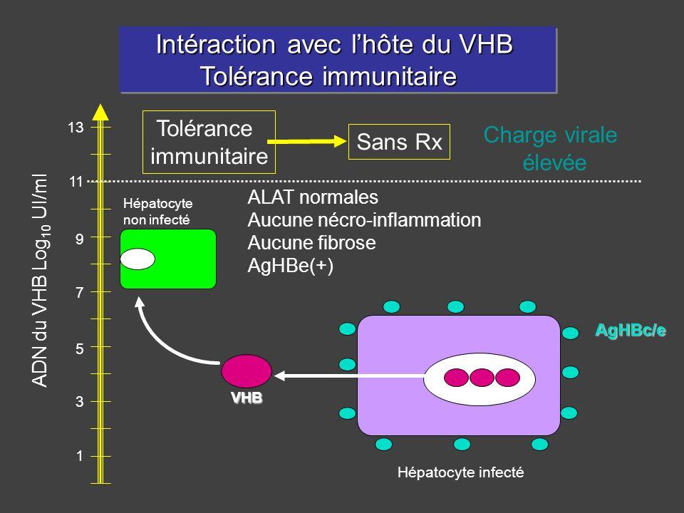1 3 5 7 9 11 13 Charge virale élevée Hépatocyte non infecté AgHBc/e ALAT normales Aucune nécro-inflammation Aucune fibrose AgHBe(+) Intéraction avec l