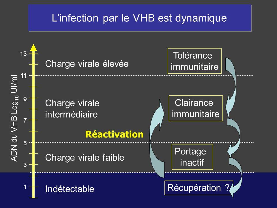 1 3 5 7 9 11 13 Linfection par le VHB est dynamique Tolérance immunitaire Clairance immunitaire Portage inactif Récupération ? Réactivation ADN du VHB