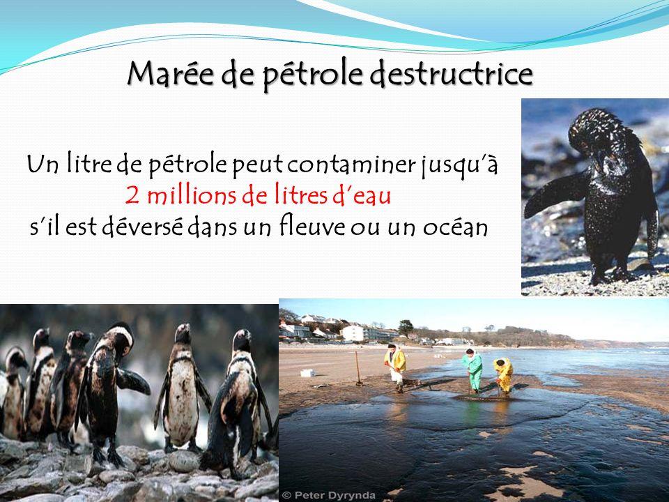 Un litre de pétrole peut contaminer jusquà 2 millions de litres deau sil est déversé dans un fleuve ou un océan Marée de pétrole destructrice