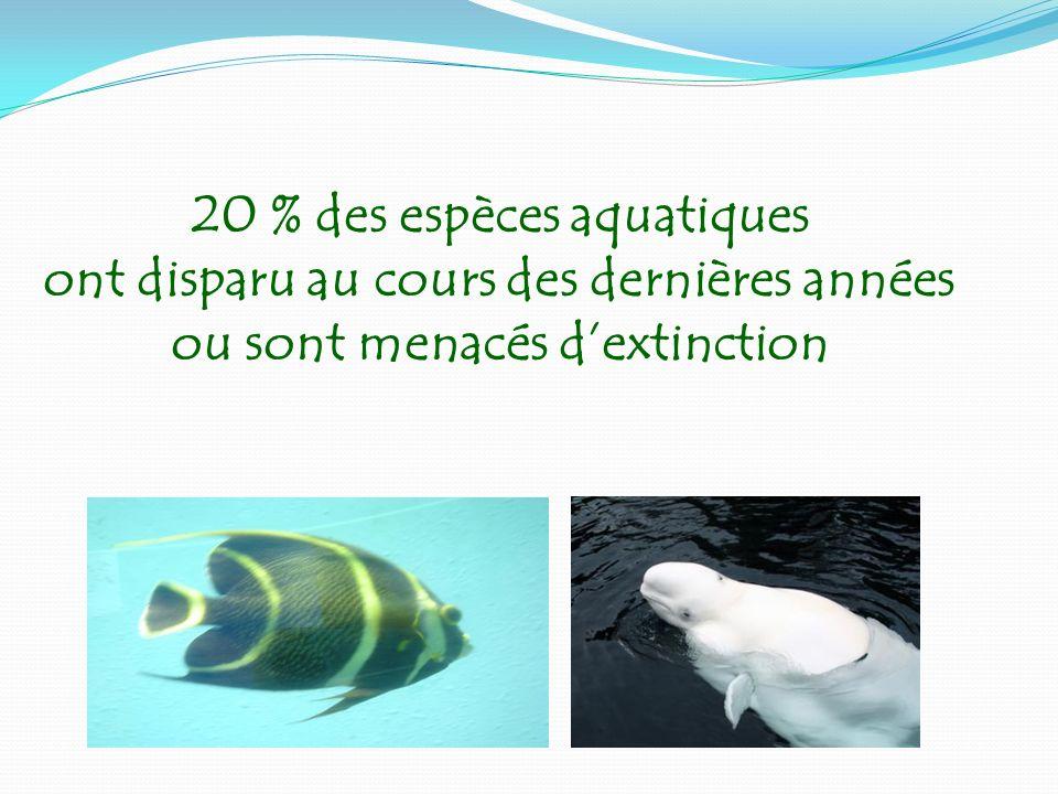 20 % des espèces aquatiques ont disparu au cours des dernières années ou sont menacés dextinction