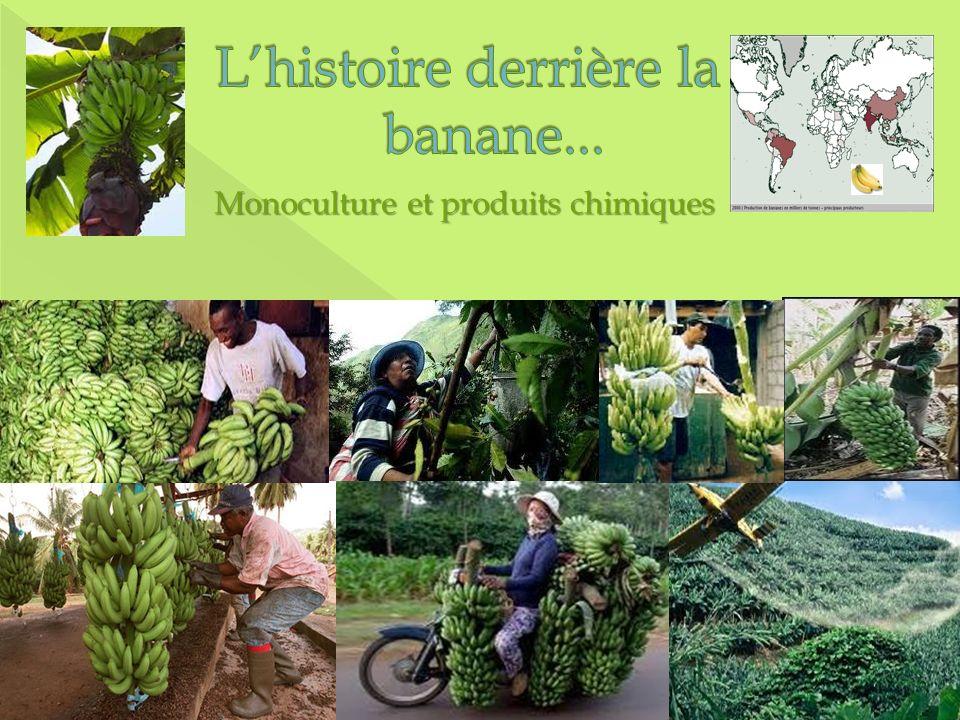 Monoculture et produits chimiques