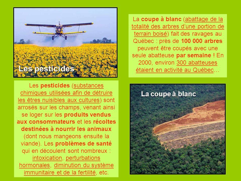 La coupe à blanc Les pesticides Les pesticides (substances chimiques utilisées afin de détruire les êtres nuisibles aux cultures) sont arrosés sur les