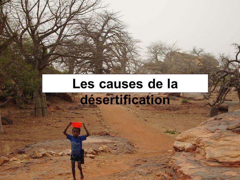 Les causes de la désertification