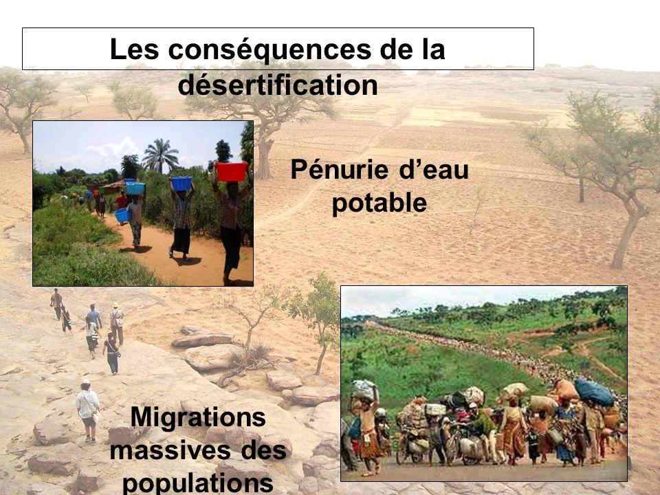 Les conséquences de la désertification Migrations massives des populations Pénurie deau potable