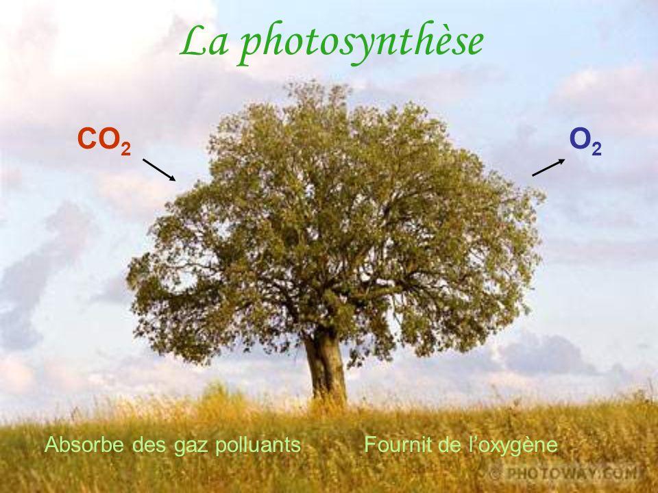 La photosynthèse CO 2 Absorbe des gaz polluants Fournit de loxygène O2O2