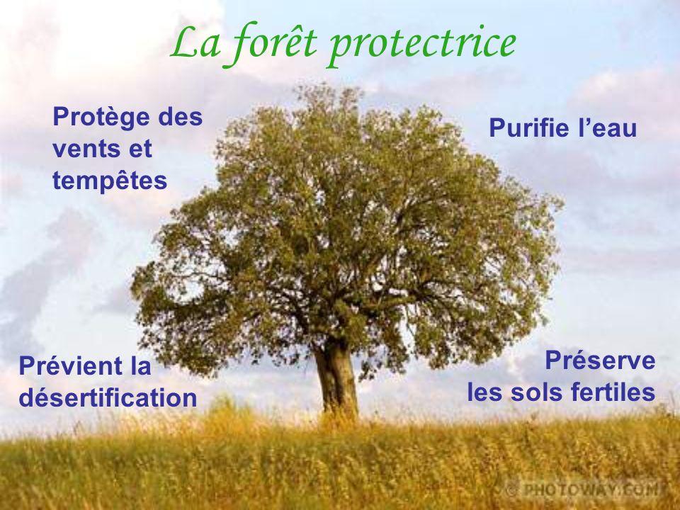 La forêt protectrice Préserve les sols fertiles Protège des vents et tempêtes Purifie leau Prévient la désertification