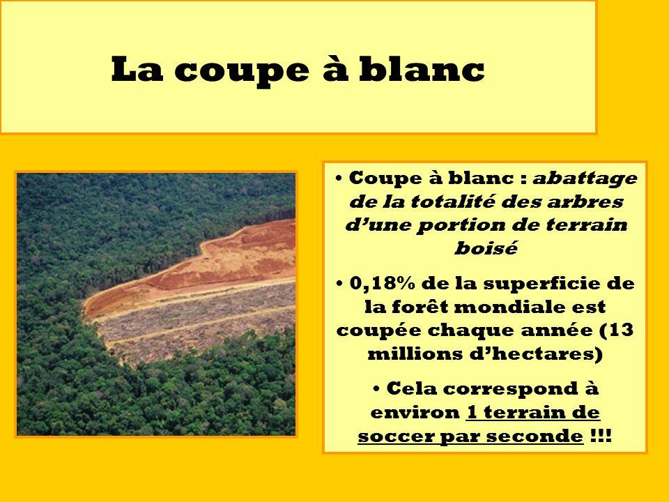 La coupe à blanc Coupe à blanc : abattage de la totalité des arbres dune portion de terrain boisé 0,18% de la superficie de la forêt mondiale est coup