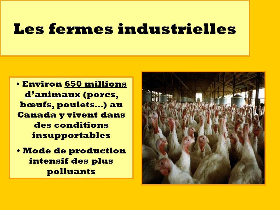 Les fermes industrielles Environ 650 millions danimaux (porcs, bœufs, poulets…) au Canada y vivent dans des conditions insupportables Mode de producti