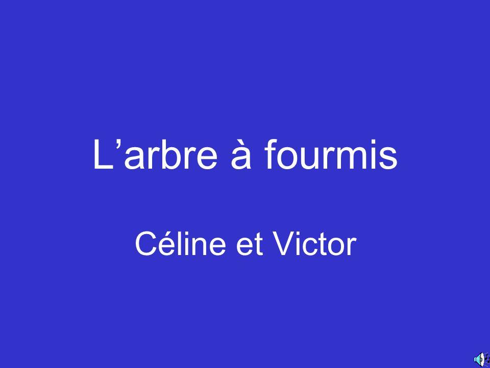 Larbre à fourmis Céline et Victor