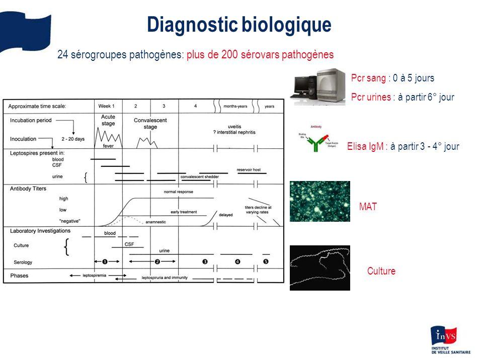 Surveillance épidémiologique Définitions des cas: Cas possibles : signes cliniques évocateurs (fièvre et syndrome algique) et ELISA IgM + et MAT - ou non fait Cas Confirmés : PCR + or MAT + or culture +