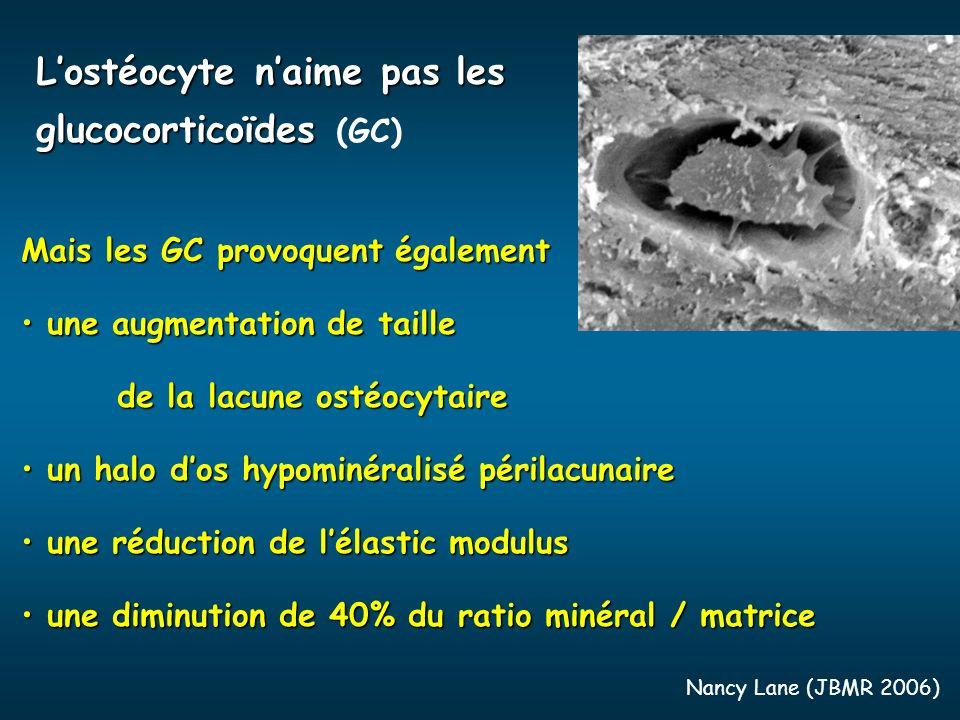 Lostéocyte naime pas les glucocorticoïdes Lostéocyte naime pas les glucocorticoïdes (GC) Nancy Lane (JBMR 2006) Mais les GC provoquent également une a