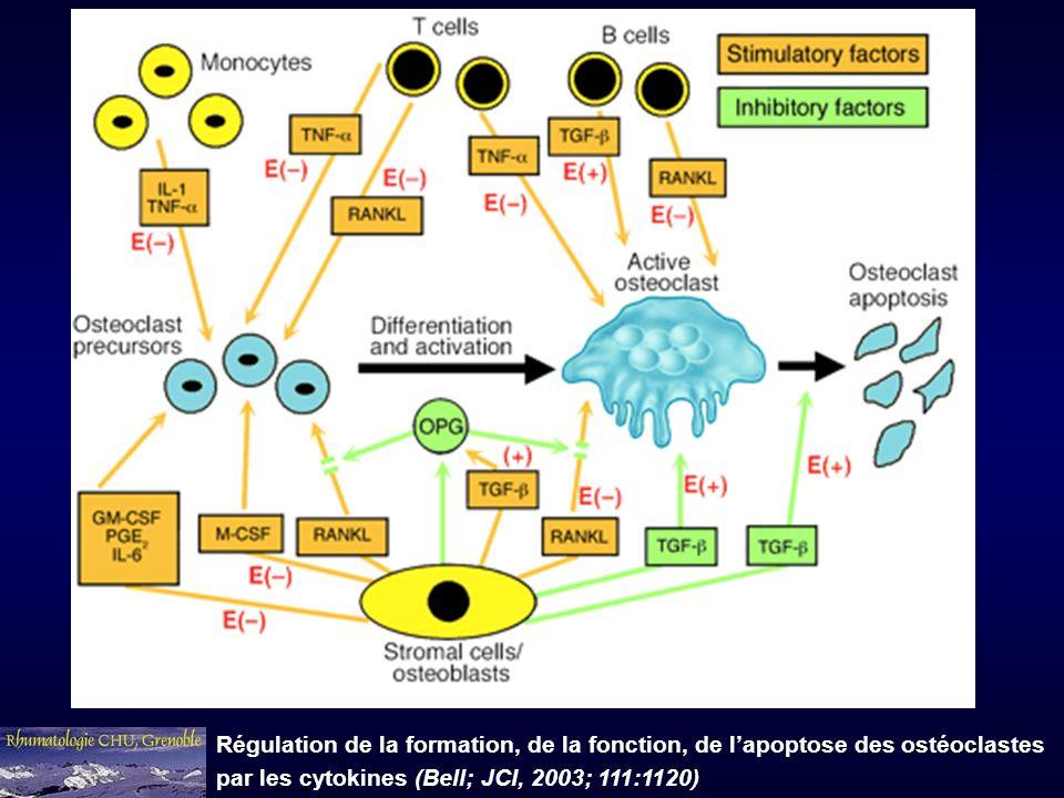 Régulation de la formation, de la fonction, de lapoptose des ostéoclastes par les cytokines (Bell; JCI, 2003; 111:1120)