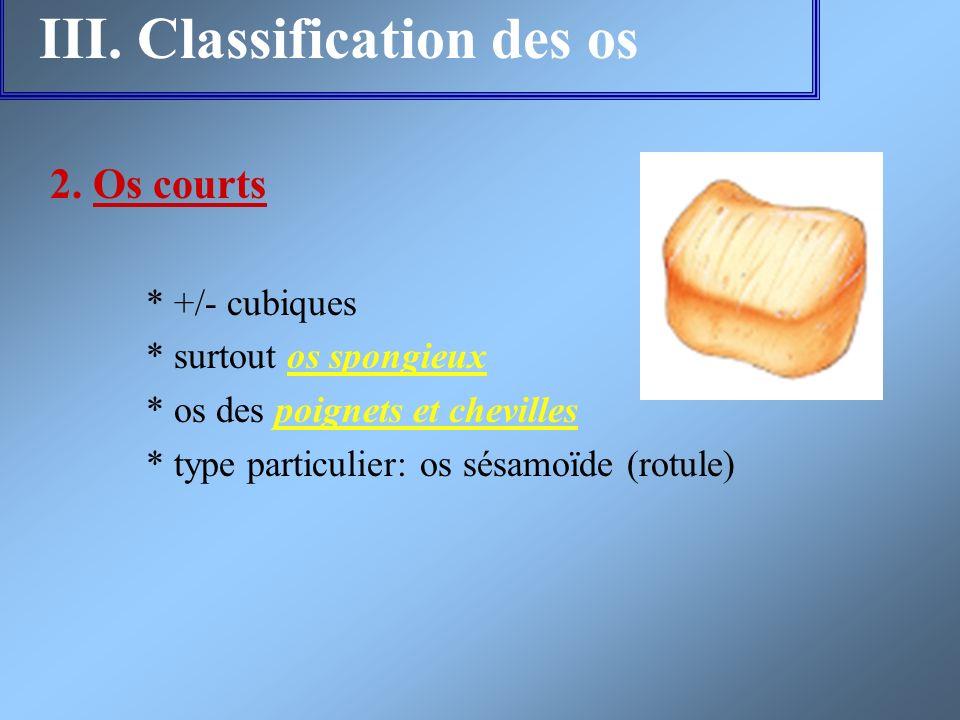 III. Classification des os 2. Os courts * +/- cubiques * surtout os spongieux * os des poignets et chevilles * type particulier: os sésamoïde (rotule)