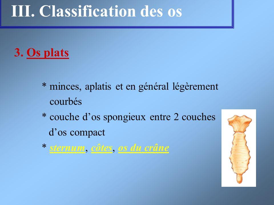 III. Classification des os 3. Os plats * minces, aplatis et en général légèrement courbés * couche dos spongieux entre 2 couches dos compact * sternum