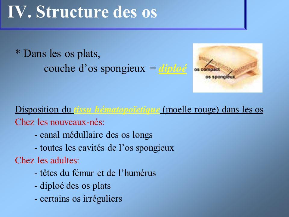 IV. Structure des os * Dans les os plats, couche dos spongieux = diploé Disposition du tissu hématopoïetique (moelle rouge) dans les os Chez les nouve
