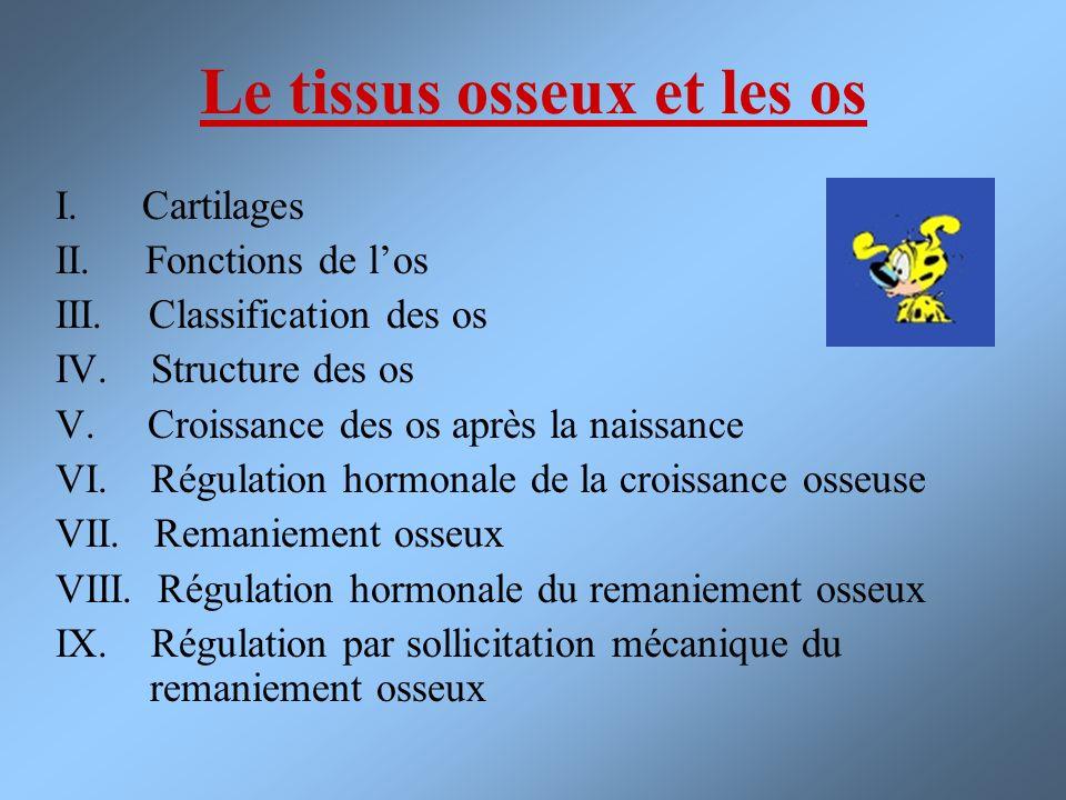 Le tissus osseux et les os I. Cartilages II. Fonctions de los III. Classification des os IV. Structure des os V. Croissance des os après la naissance