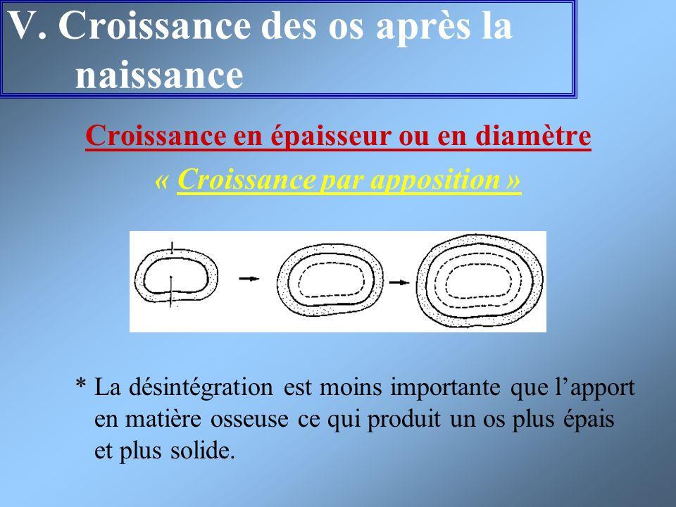 V. Croissance des os après la naissance Croissance en épaisseur ou en diamètre « Croissance par apposition » * La désintégration est moins importante