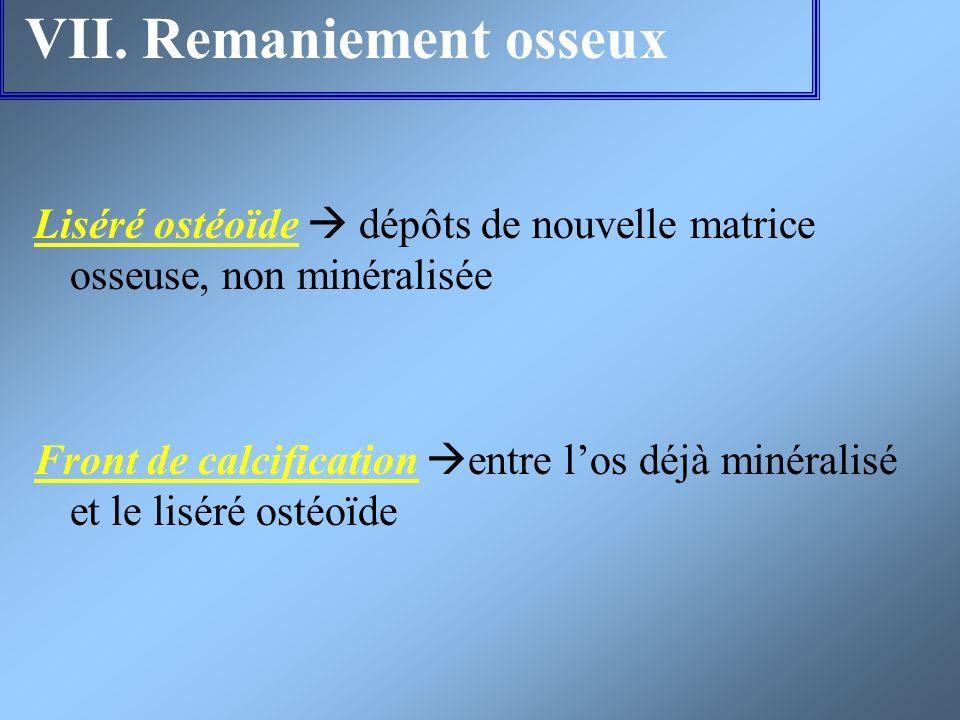 VII. Remaniement osseux Liséré ostéoïde dépôts de nouvelle matrice osseuse, non minéralisée Front de calcification entre los déjà minéralisé et le lis