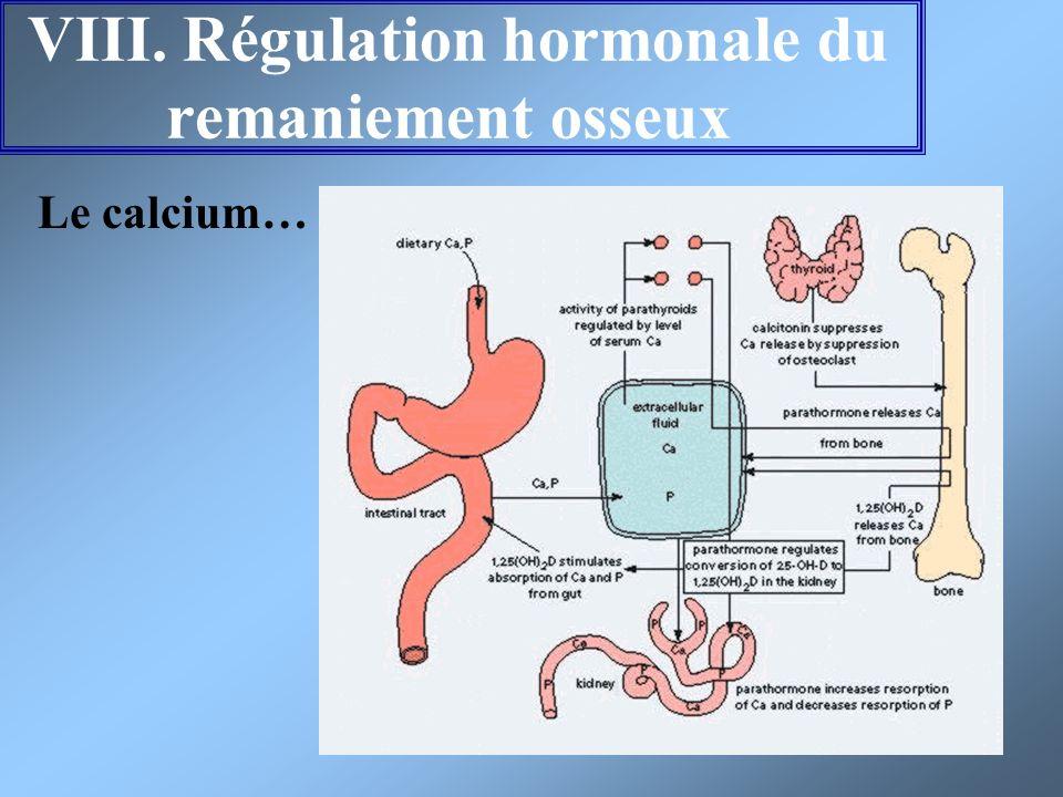 VIII. Régulation hormonale du remaniement osseux Le calcium…