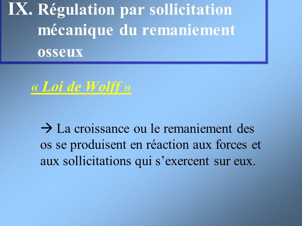 IX. Régulation par sollicitation mécanique du remaniement osseux « Loi de Wolff » La croissance ou le remaniement des os se produisent en réaction aux