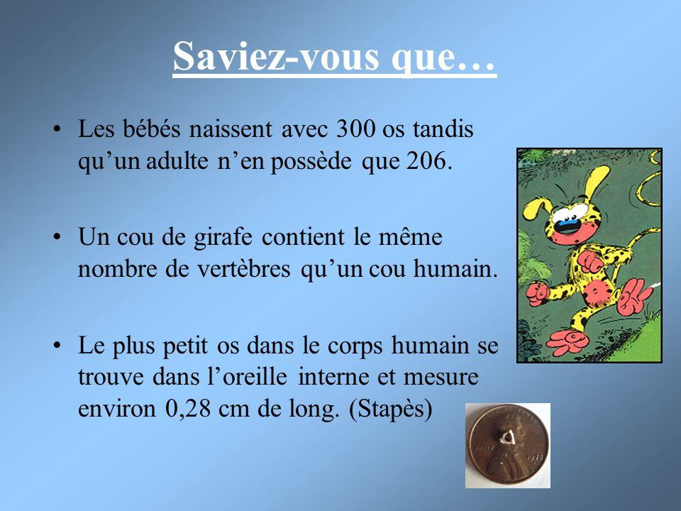 Saviez-vous que… Les bébés naissent avec 300 os tandis quun adulte nen possède que 206. Un cou de girafe contient le même nombre de vertèbres quun cou