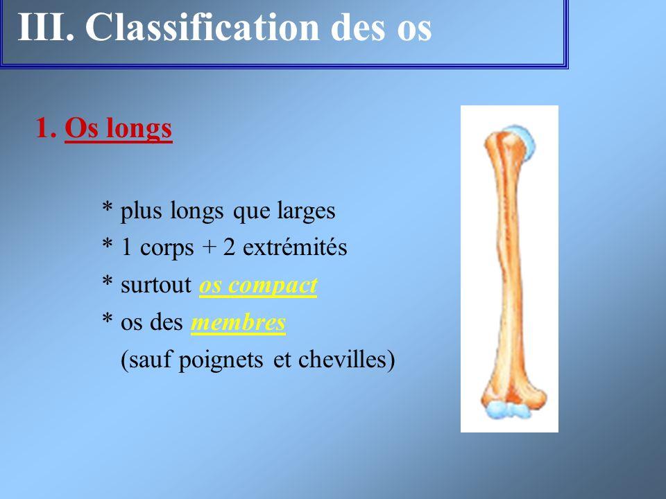 III. Classification des os 1. Os longs * plus longs que larges * 1 corps + 2 extrémités * surtout os compact * os des membres (sauf poignets et chevil