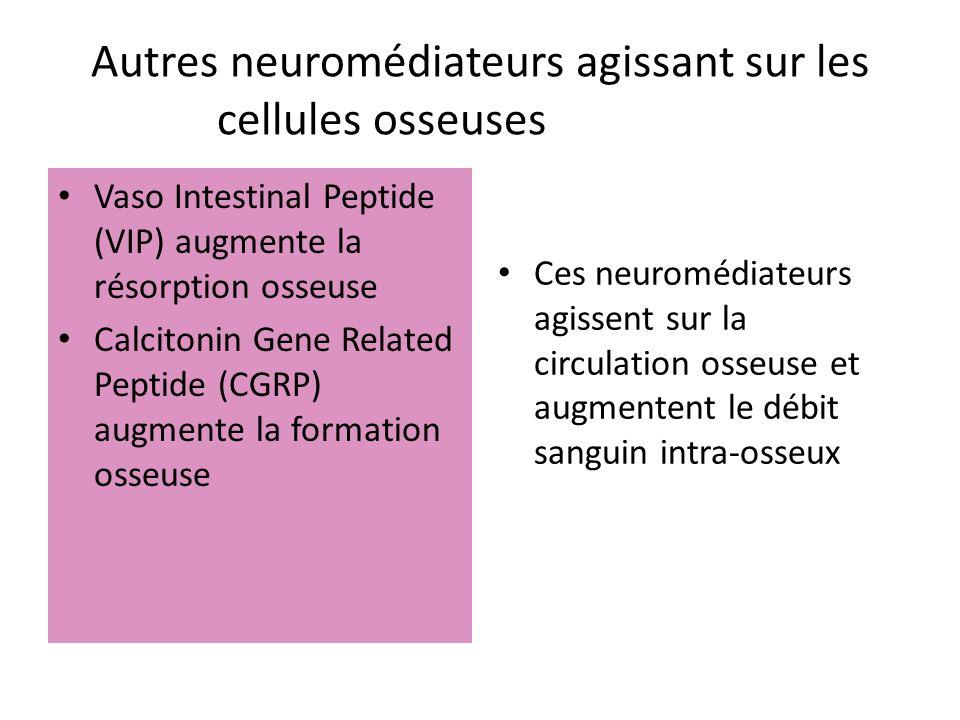 Autres neuromédiateurs agissant sur les cellules osseusesosseuses : Vaso Intestinal Peptide (VIP) augmente la résorption osseuse Calcitonin Gene Relat