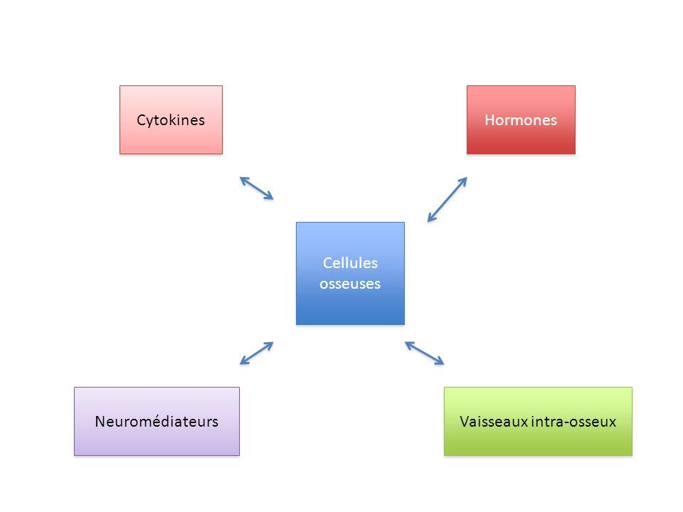 Cellules osseuses Hormones Cytokines Neuromédiateurs Vaisseaux intra-osseux