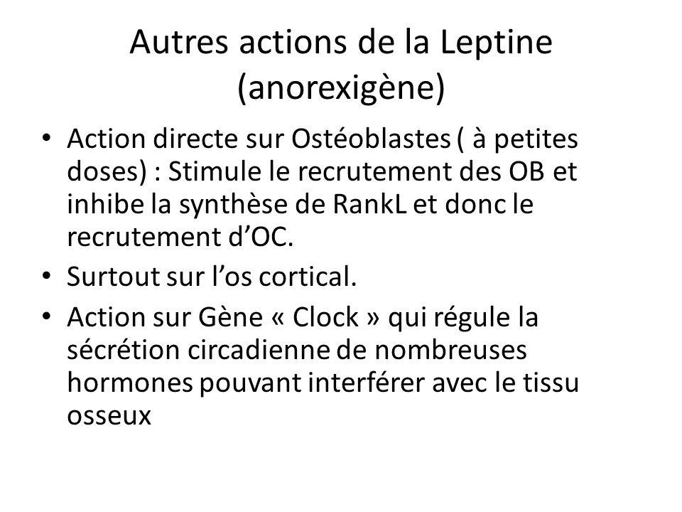 Autres actions de la Leptine (anorexigène) Action directe sur Ostéoblastes ( à petites doses) : Stimule le recrutement des OB et inhibe la synthèse de