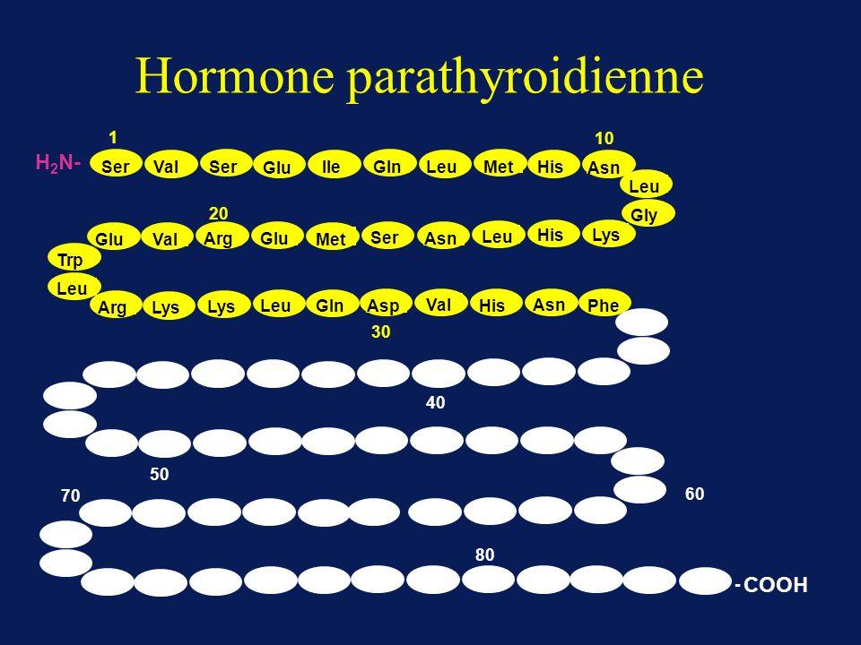 Hormone parathyroidienne 1 10 20 30 SerValSer Glu IleGlnLeuMetHis Asn Leu Gly Lys His Leu Asn Ser Met GluArg Val Glu Trp Leu ArgLys LeuGlnAsp Val His Asn Phe 50 40 60 70 80 - COOH H 2 N-