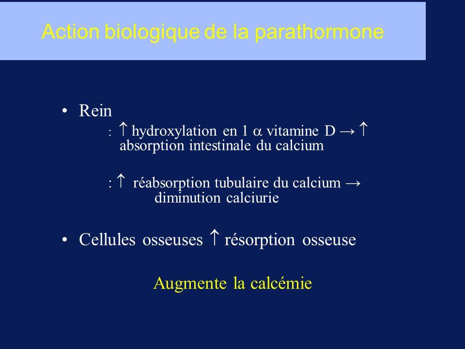 Action biologique de la parathormone Rein : hydroxylation en 1 vitamine D absorption intestinale du calcium : réabsorption tubulaire du calcium diminution calciurie Cellules osseuses résorption osseuse Augmente la calcémie