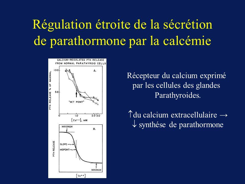 Régulation étroite de la sécrétion de parathormone par la calcémie Récepteur du calcium exprimé par les cellules des glandes Parathyroides. du calcium