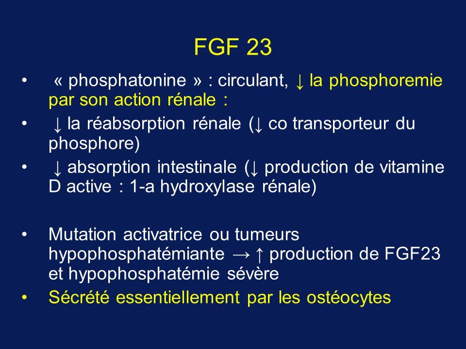 FGF 23 « phosphatonine » : circulant, la phosphoremie par son action rénale : la réabsorption rénale ( co transporteur du phosphore) absorption intestinale ( production de vitamine D active : 1-a hydroxylase rénale) Mutation activatrice ou tumeurs hypophosphatémiante production de FGF23 et hypophosphatémie sévère Sécrété essentiellement par les ostéocytes