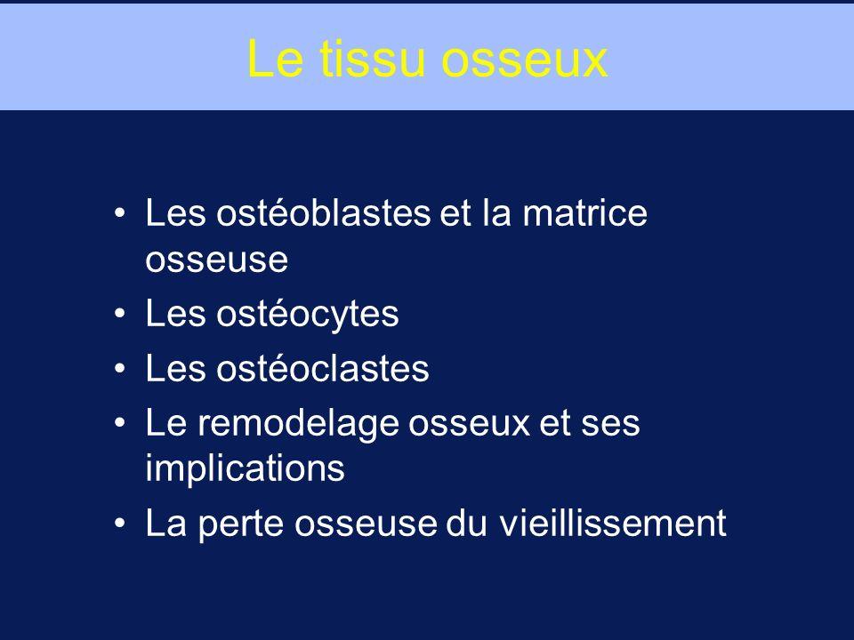 Le tissu osseux Les ostéoblastes et la matrice osseuse Les ostéocytes Les ostéoclastes Le remodelage osseux et ses implications La perte osseuse du vieillissement