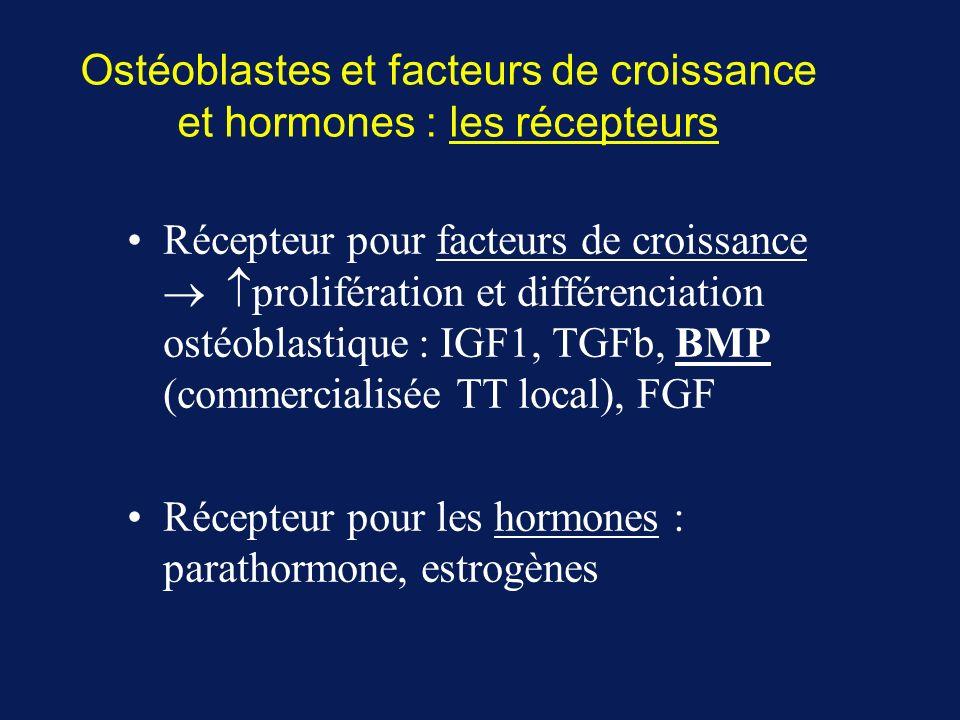 Ostéoblastes et facteurs de croissance et hormones : les récepteurs Récepteur pour facteurs de croissance prolifération et différenciation ostéoblastique : IGF1, TGFb, BMP (commercialisée TT local), FGF Récepteur pour les hormones : parathormone, estrogènes