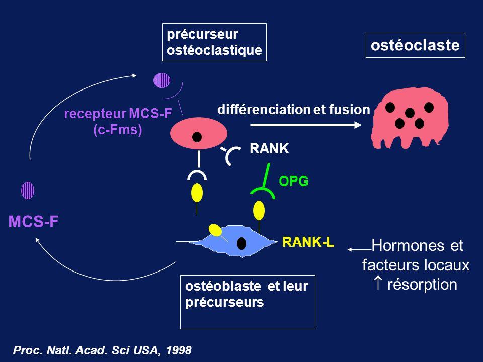 MCS-F RANK RANK-L OPG précurseur ostéoclastique ostéoclaste différenciation et fusion ostéoblaste et leur précurseurs recepteur MCS-F (c-Fms) Proc. Na