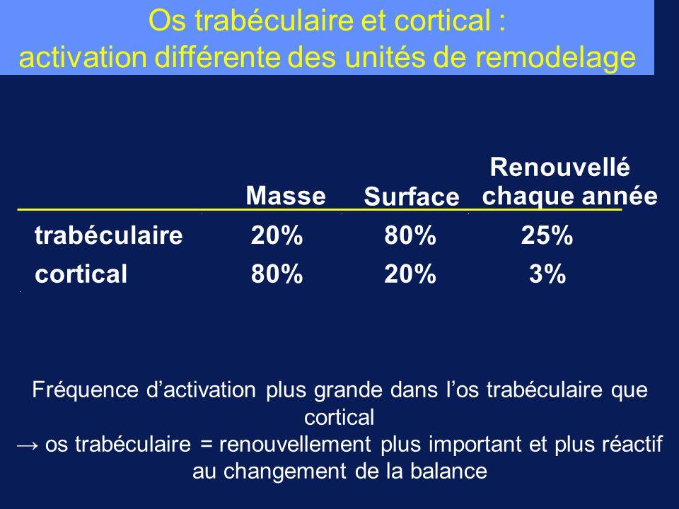 Os trabéculaire et cortical : activation différente des unités de remodelage Masse Surface Renouvellé chaque année trabéculaire20%80%25% cortical80%20
