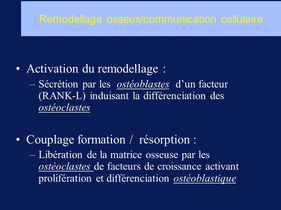 Activation du remodellage : –Sécrétion par les ostéoblastes dun facteur (RANK-L) induisant la différenciation des ostéoclastes Couplage formation / ré
