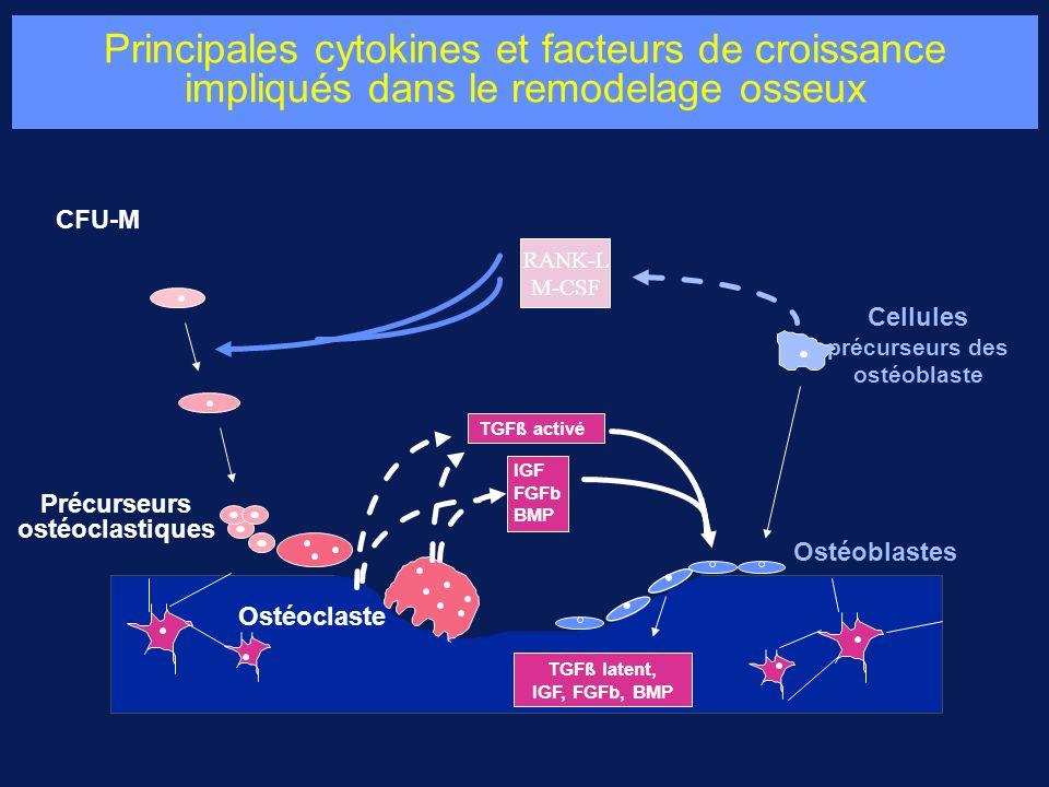 Principales cytokines et facteurs de croissance impliqués dans le remodelage osseux CFU-M Précurseurs ostéoclastiques Cellules précurseurs des ostéoblaste Ostéoblastes RANK-L M-CSF TGFß activé IGF FGFb BMP TGFß latent, IGF, FGFb, BMP Ostéoclaste