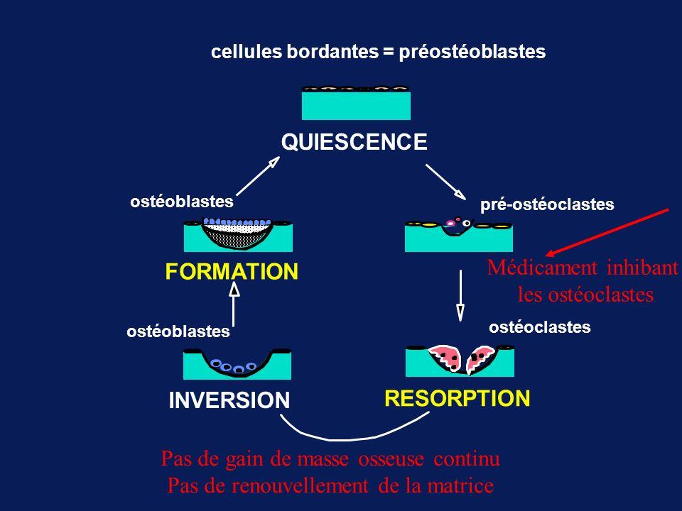 cellules bordantes = préostéoblastes pré-ostéoclastes ostéoclastes ostéoblastes RESORPTION INVERSION FORMATION QUIESCENCE Médicament inhibant les ostéoclastes Pas de gain de masse osseuse continu Pas de renouvellement de la matrice