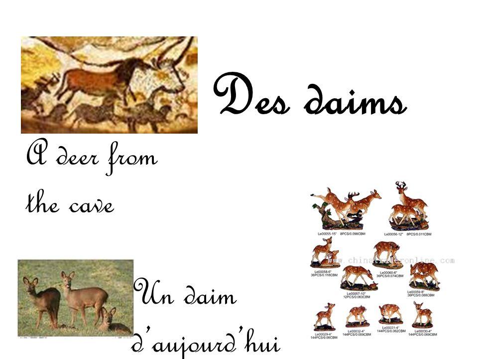 Des daims A deer from the cave Un daim d aujourd hui