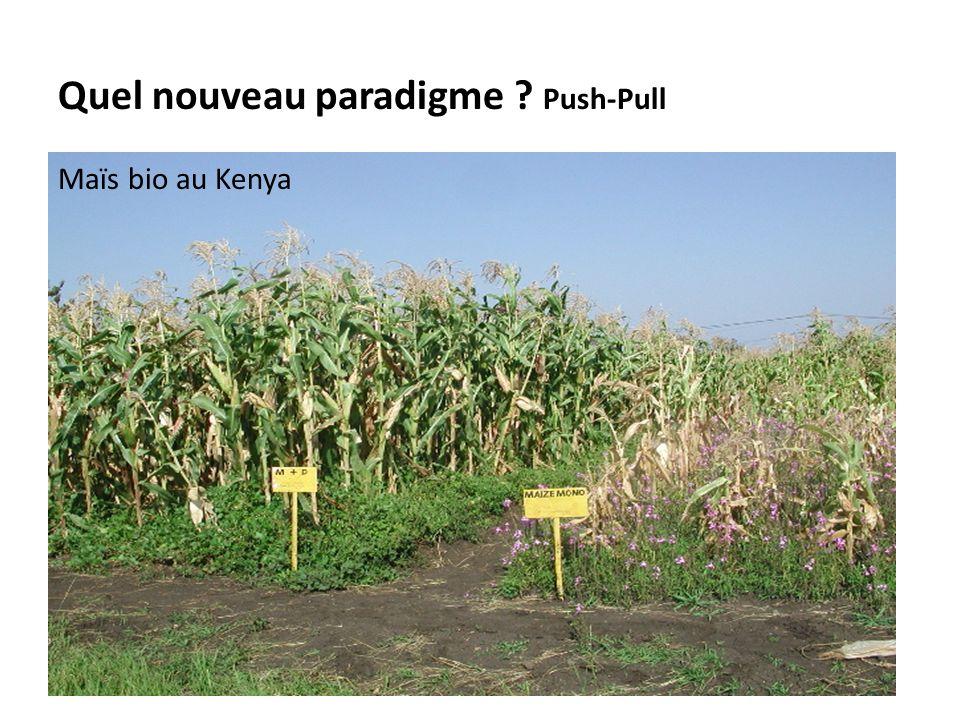 Quel nouveau paradigme ? Push-Pull Maïs bio au Kenya