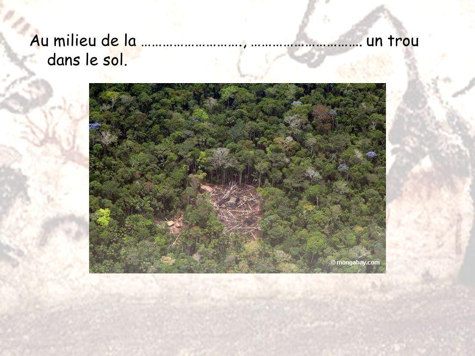 L es quatre garcons, Marcel, Jacques, Georges et Simon se promenaient, et ils sont tombés sur le grand trou provoqué par la chute dun grand pin.