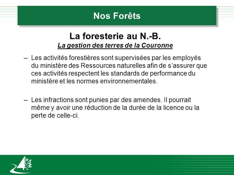 Nos Forêts La foresterie au N.-B. La gestion des terres de la Couronne –Les activités forestières sont supervisées par les employés du ministère des R