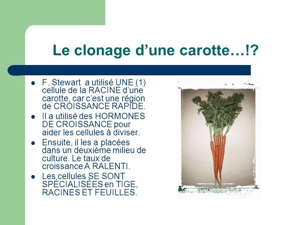 Le clonage dune carotte…!? F. Stewart a utilisé UNE (1) cellule de la RACINE dune carotte, car cest une région de CROISSANCE RAPIDE. Il a utilisé des