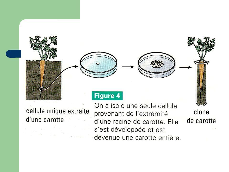 La grenouille Ce type de clonage utilise une cellule énuclée, qui est UNE CELLULE PRIVÉE DE SON NOYAU.