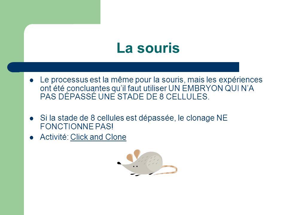 La souris Le processus est la même pour la souris, mais les expériences ont été concluantes quil faut utiliser UN EMBRYON QUI NA PAS DÉPASSÉ UNE STADE